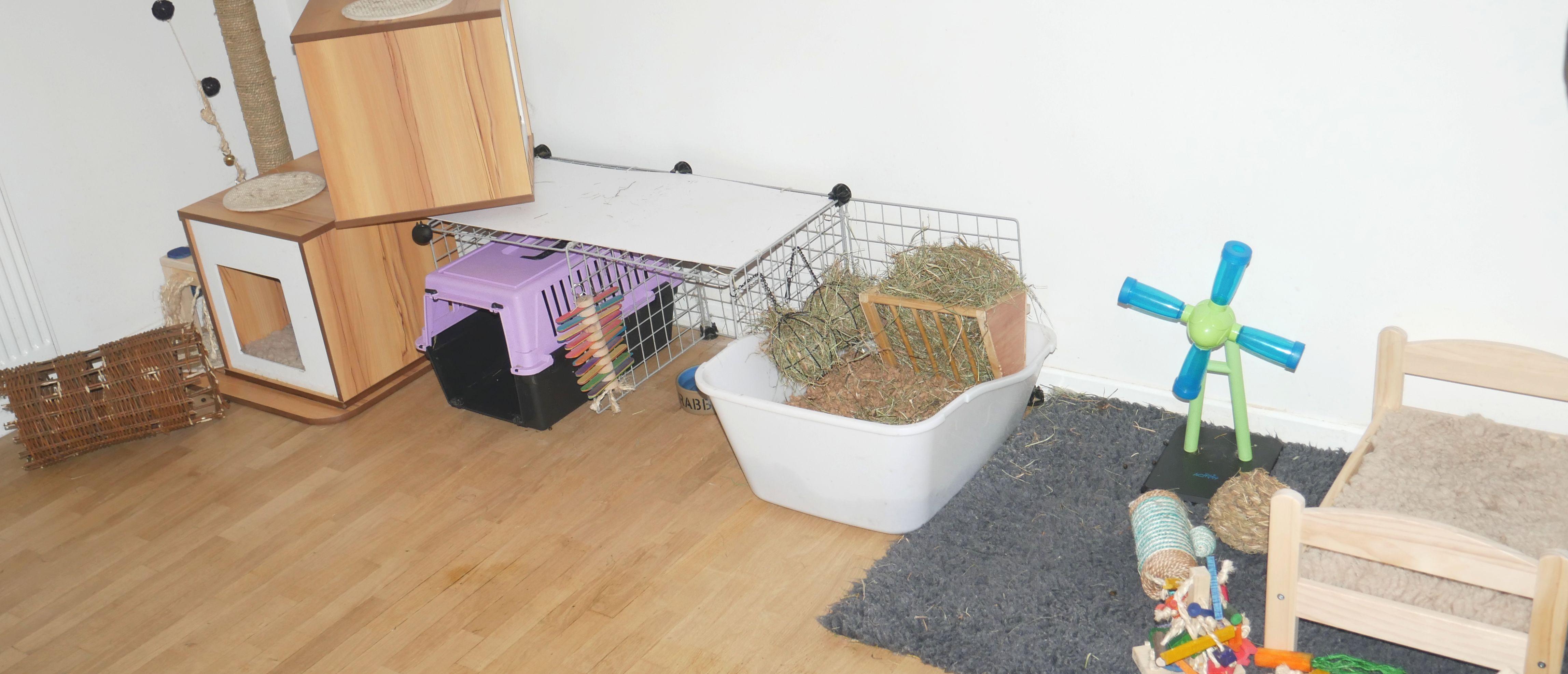 Arbre à chat, plateforme, coin litière et jouets