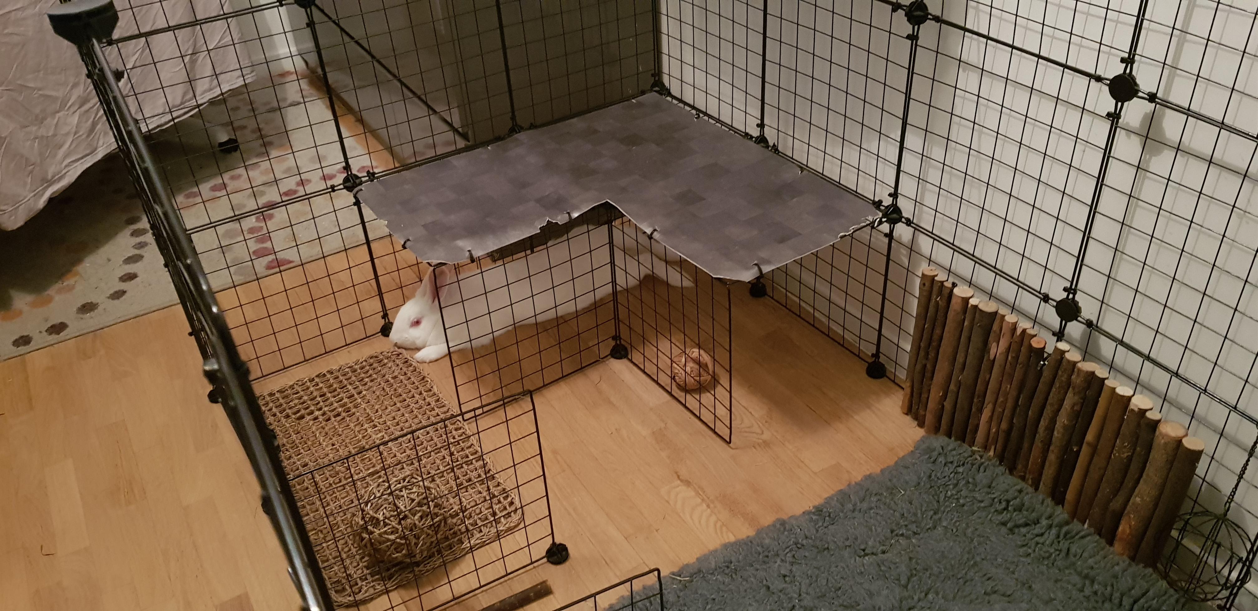 cavy haute pour lapins avec plateforme