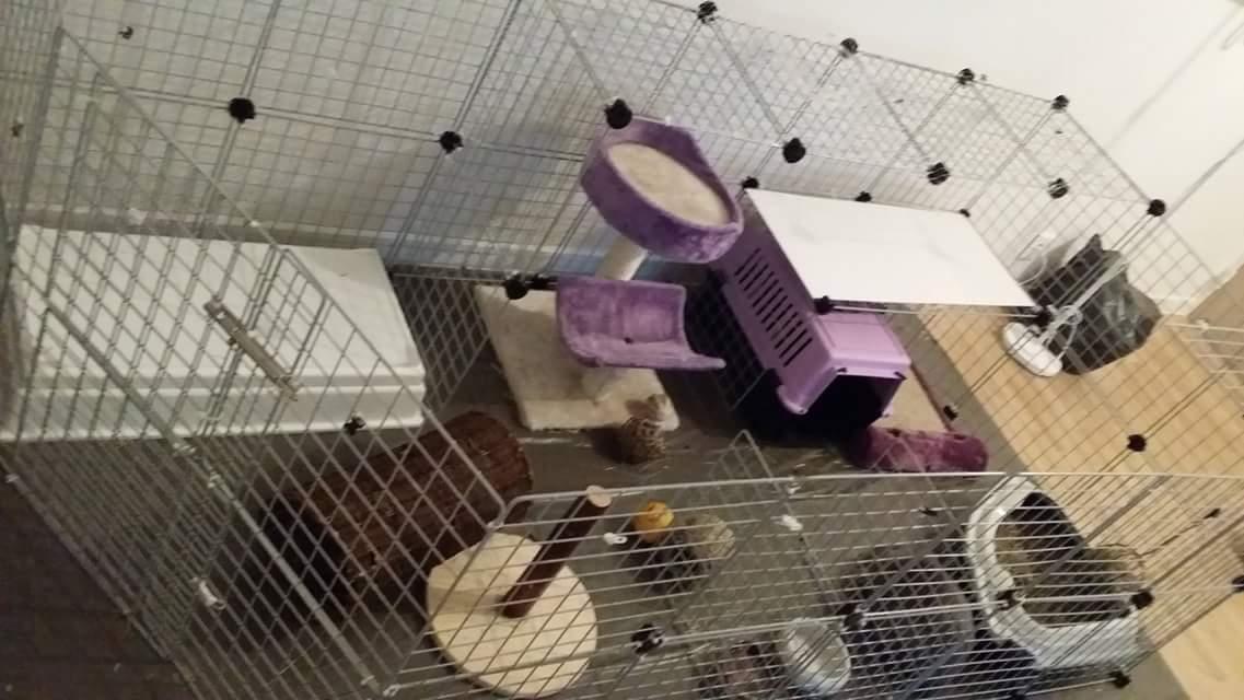 cavy aménagée avec jouets et plateforme