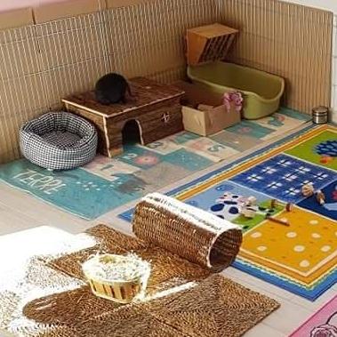 Grand espace avec différents tapis et jeux.