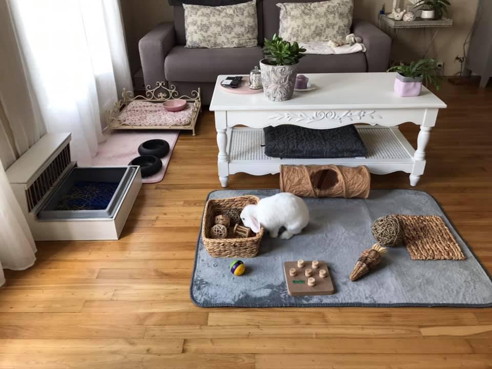 Espace dans le salon, avec tapis, petit lit, et jouets.