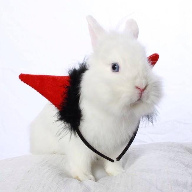 Benny & Moon The Rabbits