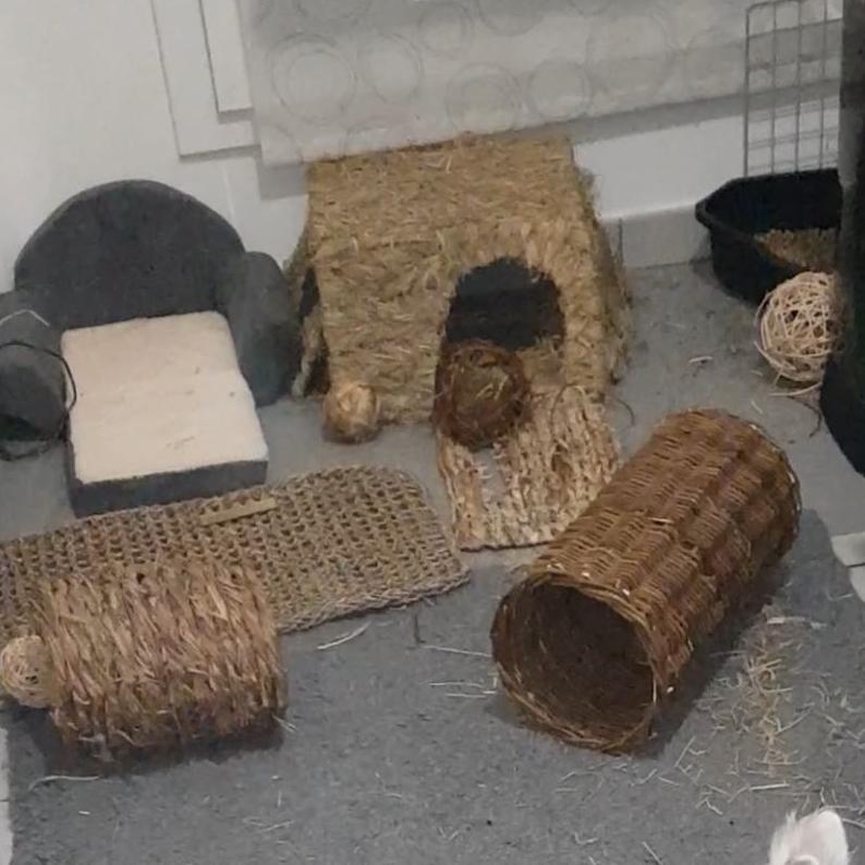 Espace avec petit lit, cabane, jouets et litière.