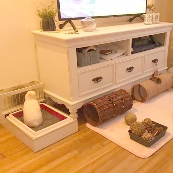 Litière, tunnels et jouets autour du meuble TV.