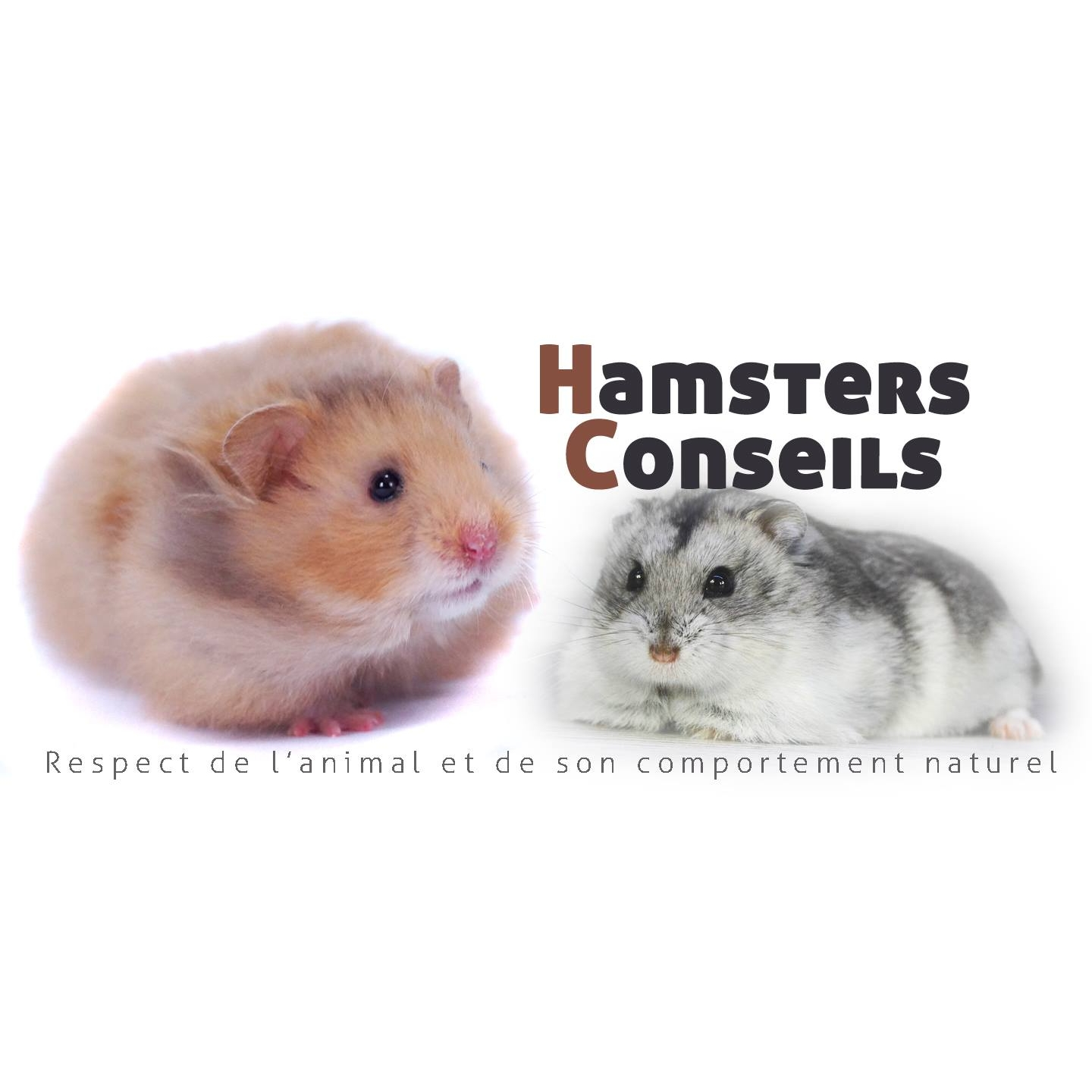 Hamsters Conseils