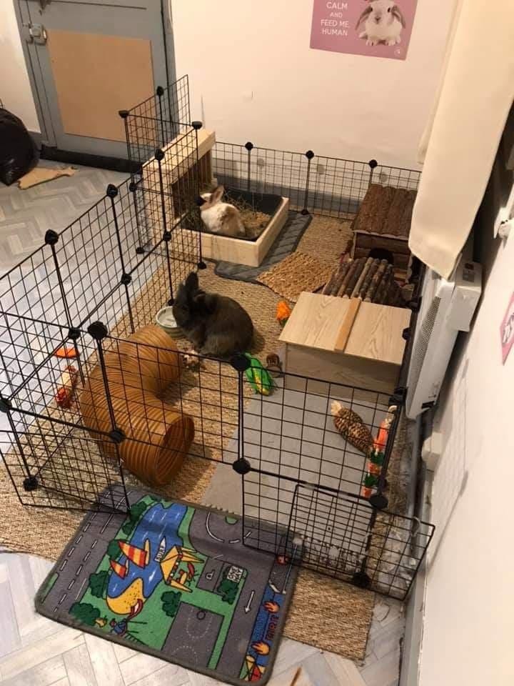 Cavy pour deux lapins, avec un râtelier litière et des jouets.