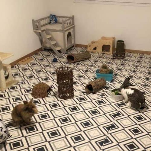 Grande pièce avec cabane et jouets.